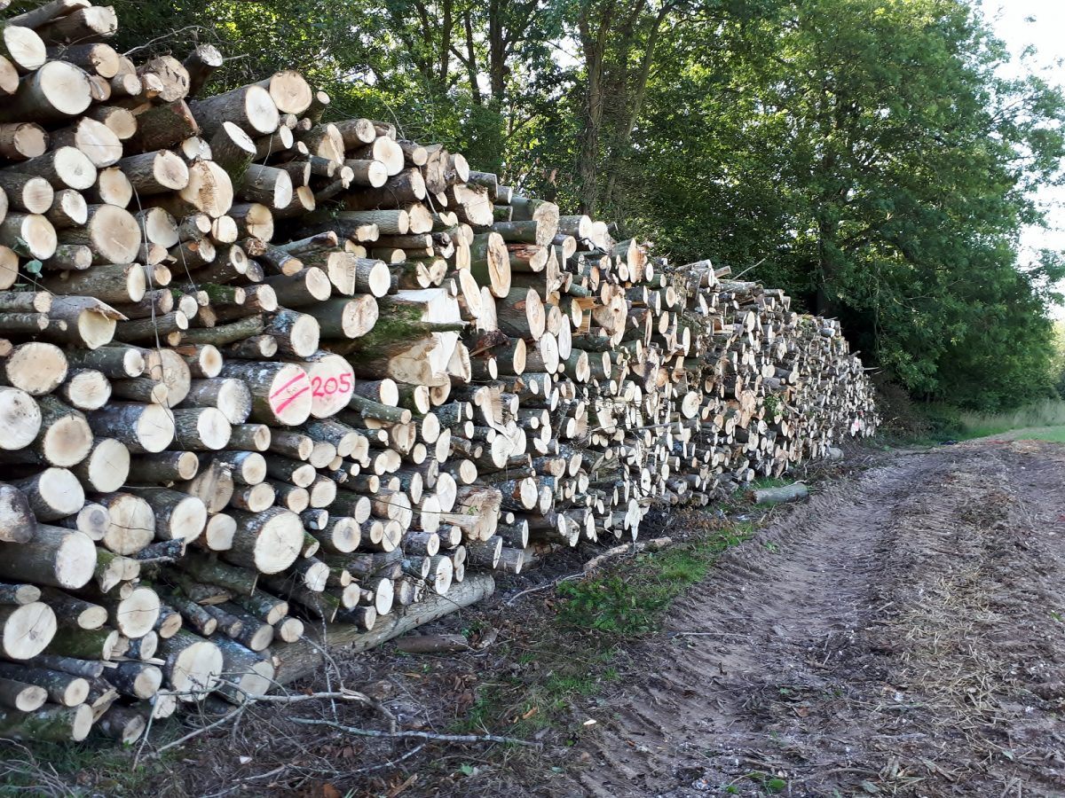 Seasoning hardwood -Forest to Fire - West Sussex logs supplier, West Dean, Chichester
